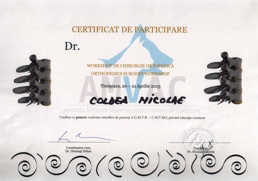 Workshop chirurgie ortopediăa